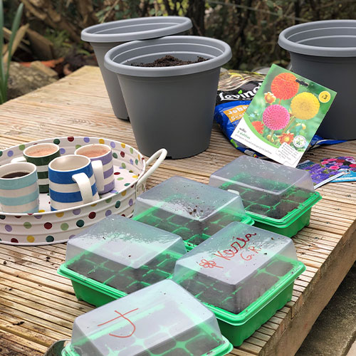 seed boxes and plant pots
